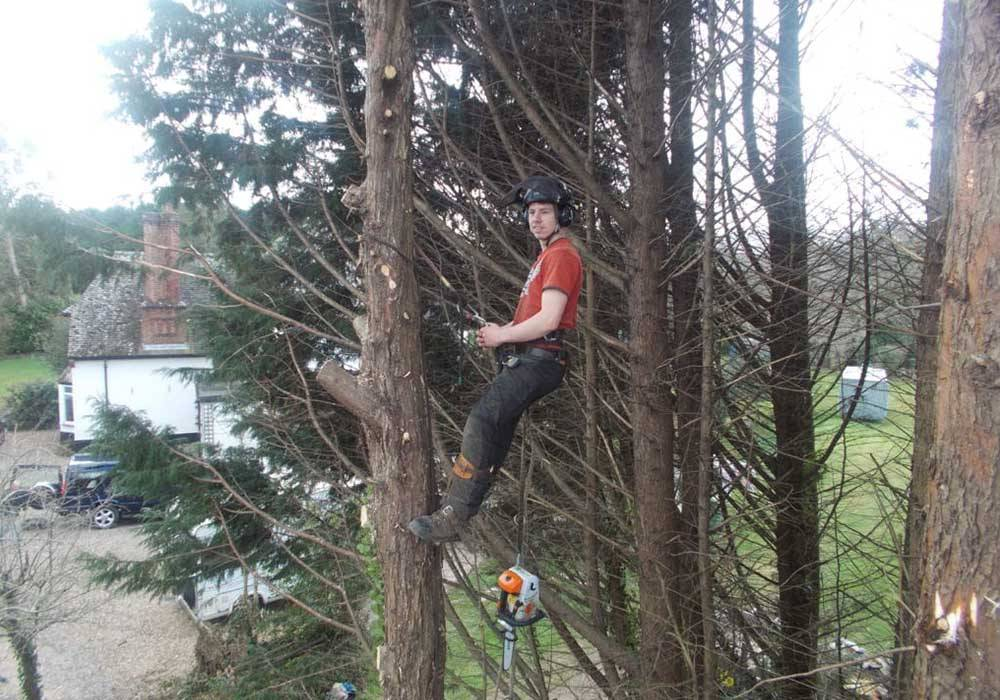 tree surgery man chopping down trees