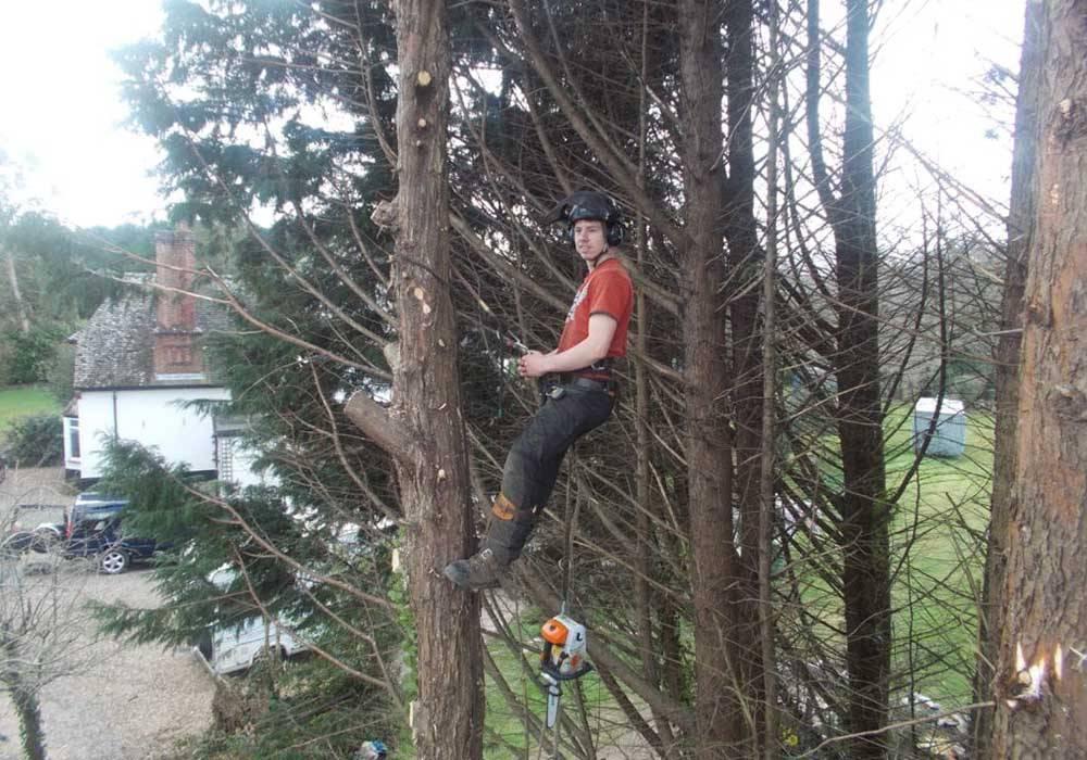 tree surgery man chopping down trees